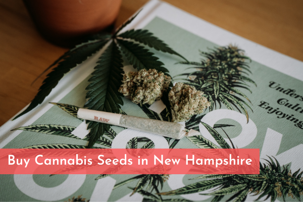 Buy Cannabis Seeds in New Hampshire