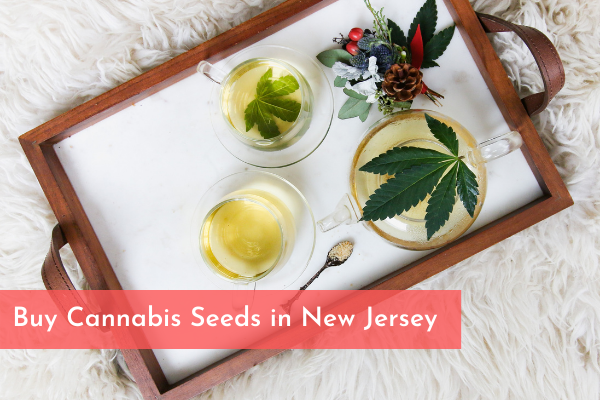 Buy Cannabis Seeds in New Jersey