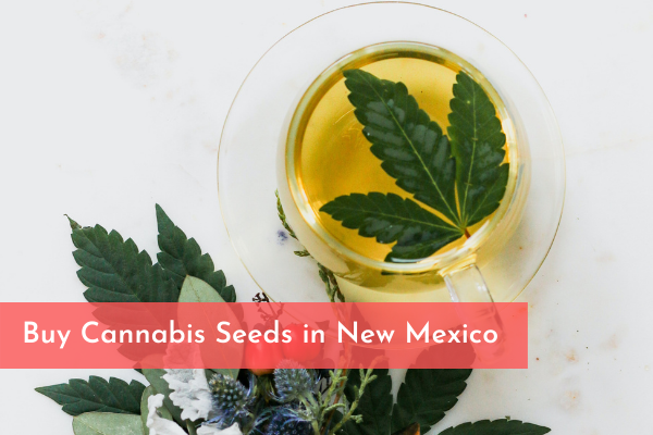 Buy Cannabis Seeds in New Mexico